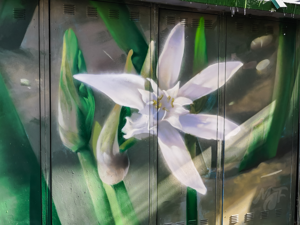 Sand lily street art in Burgas