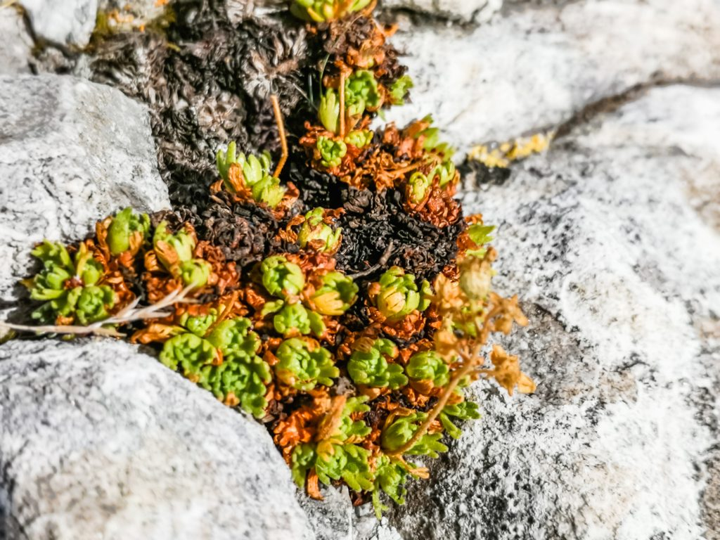 Mosses and lichens in Koncheto Pirin