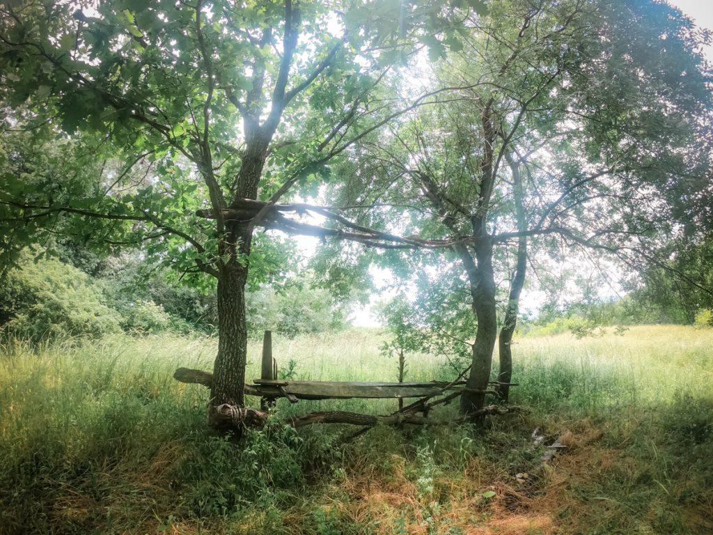 гората около село Росен