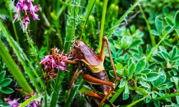 Invertebrates in Balkan Mountains