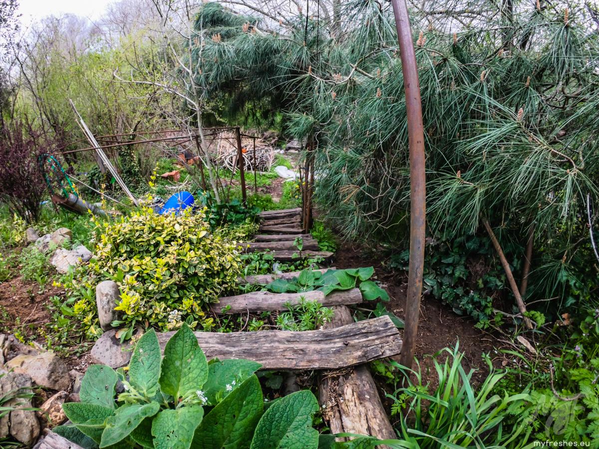 ботаническата градина на Серафимови