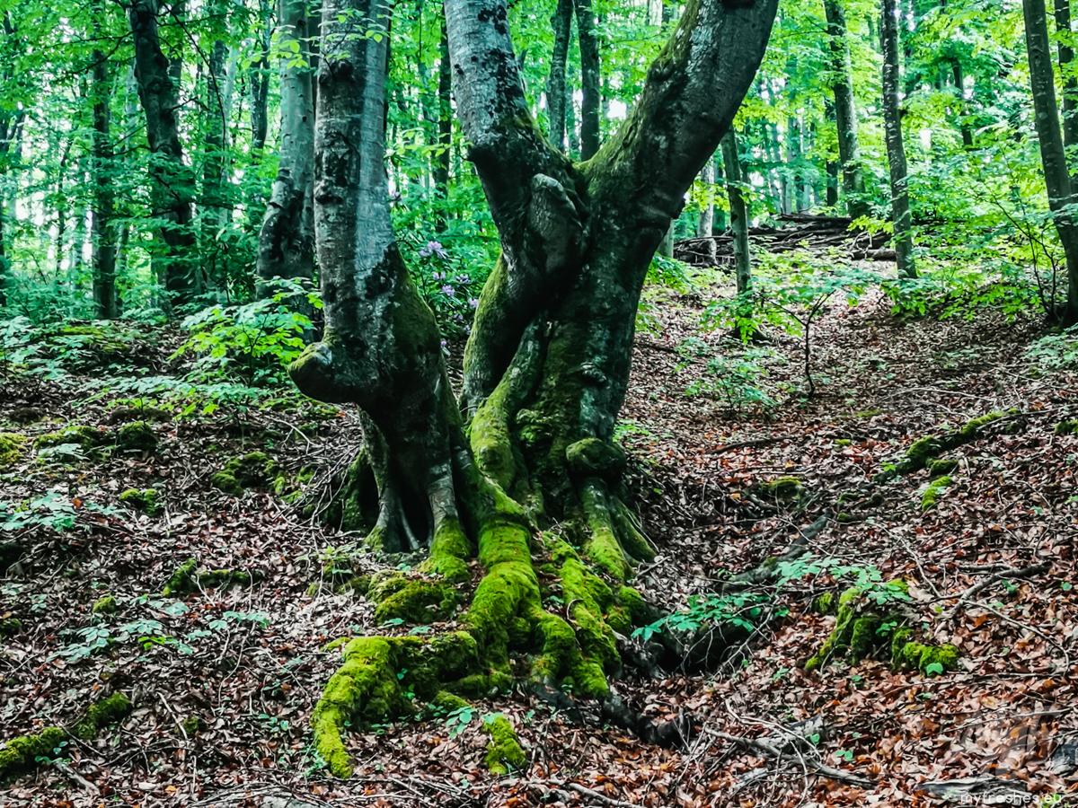маршрут В Царството на зелениката